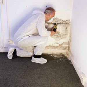 Les avantages incontournables des absorbeurs d'humidité dans votre maison