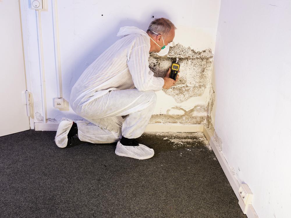 absorbeurs-d'humidité-dans-votre-maison
